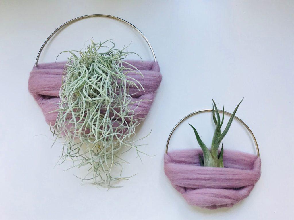 Luftplantor, airplants, Tillandsia usneoides, caput medusae