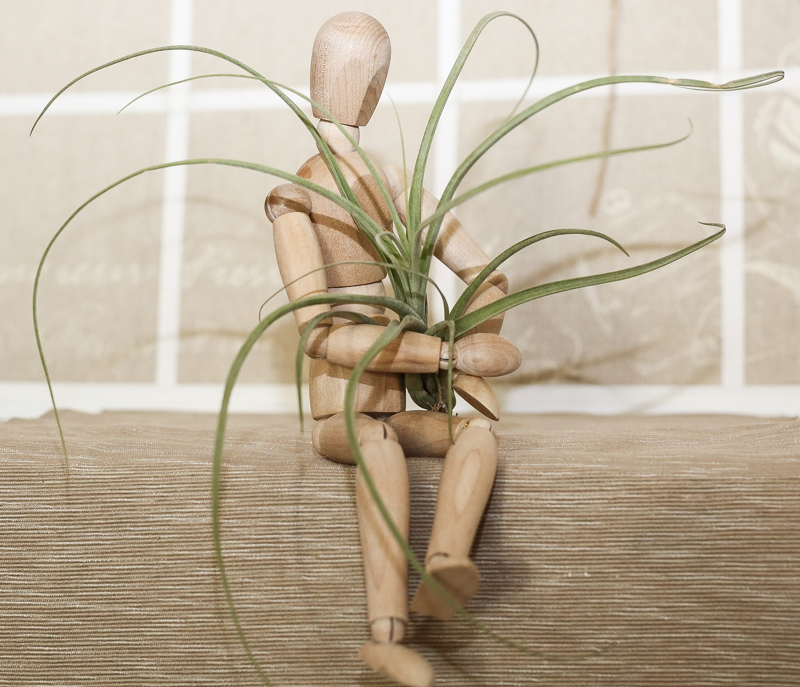 Tillandsia balbisiana, luftplanta, airplant