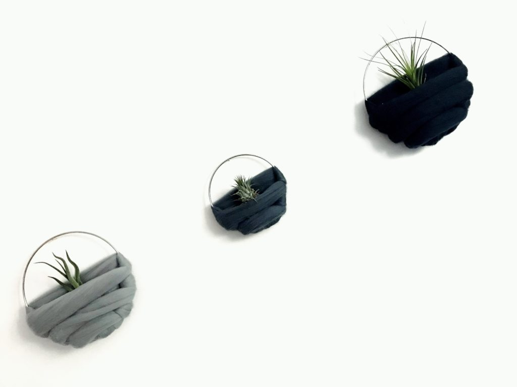 Luftplantor, airplants, Tillandsia ionantha, caput medusae, melanocrater