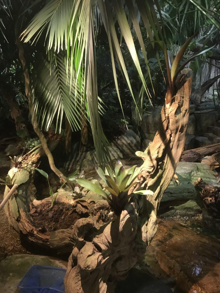 Skansen-Akvariet, bromelia, vriesea, neoregelia, rainforest, regnskog,